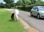 Drive safely in the New Forest this winter